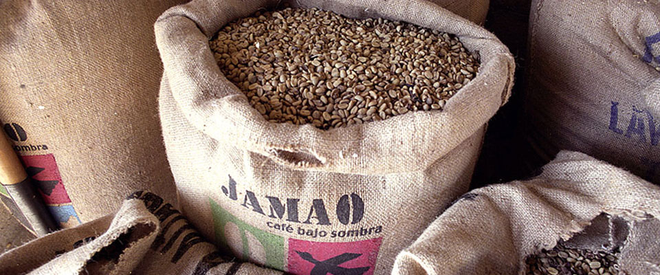 jamao green coffee
